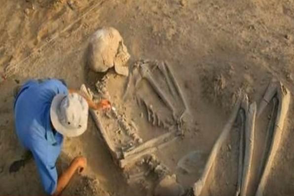 скелет гигант
