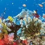 Големият коралов риф