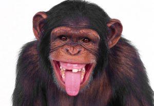 Сенсационное открытие мы пришли не от обезьяны, а от страшного монстра! top фактически -