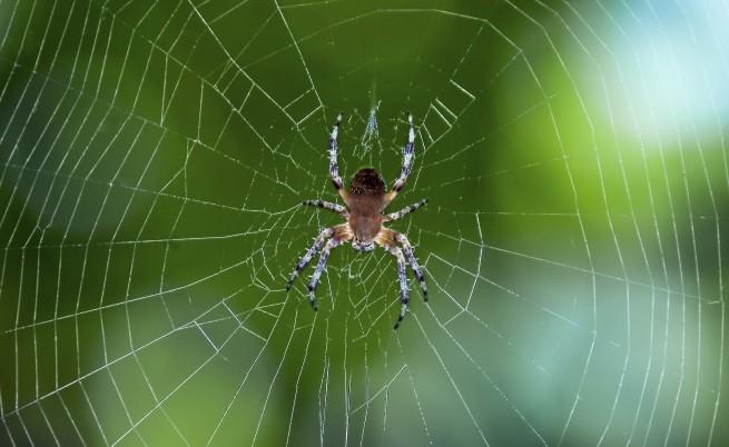 паяците