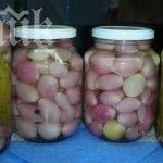 мариновани лукчета