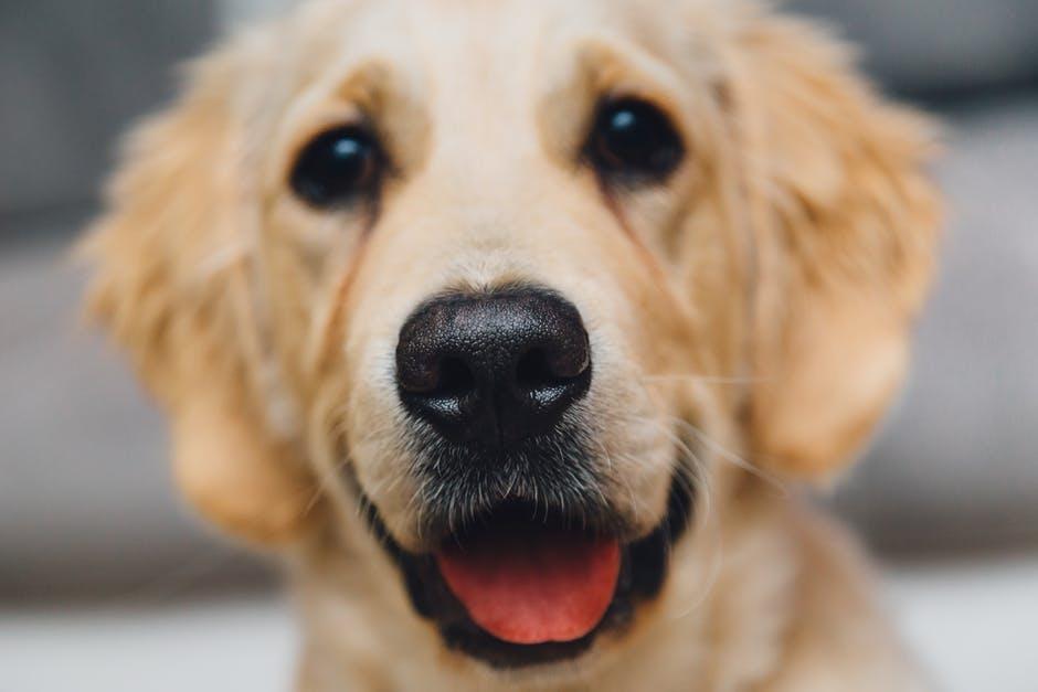 Годината на жълтото куче