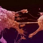 раковите клетки
