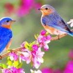 пролетното равноденствие