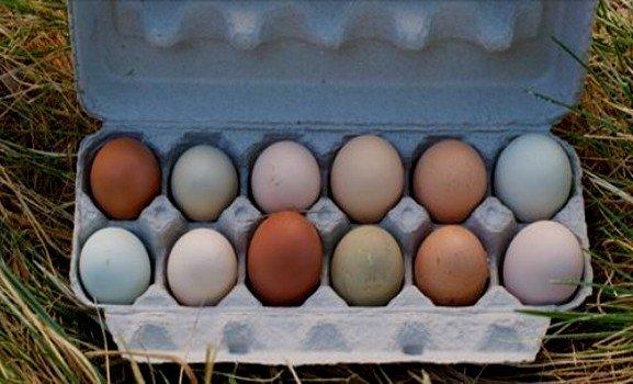 яйца с цветни черупки