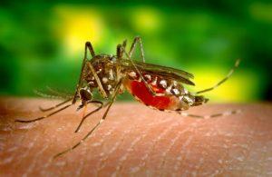 комарите