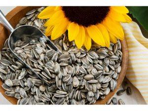 слънчогледовите семки